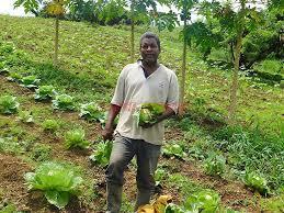 Albert TERNE sur son exploitation bio - France Antilles Martinique