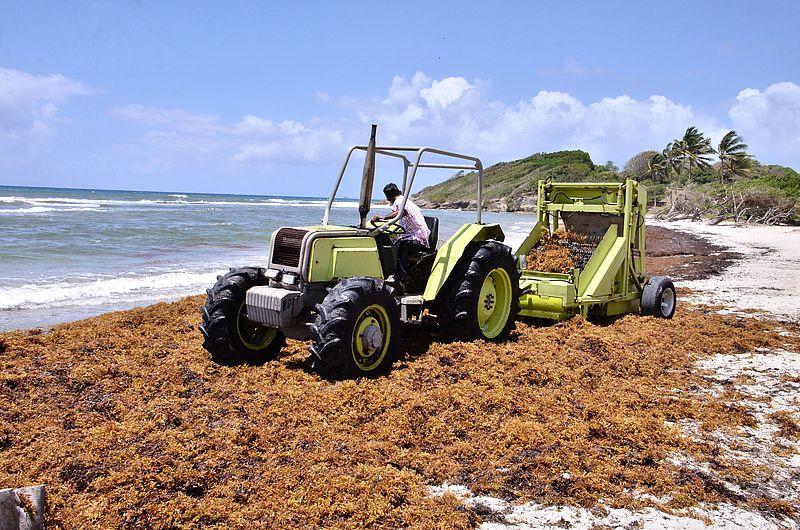 Sargasses - Transformation - Agriculture