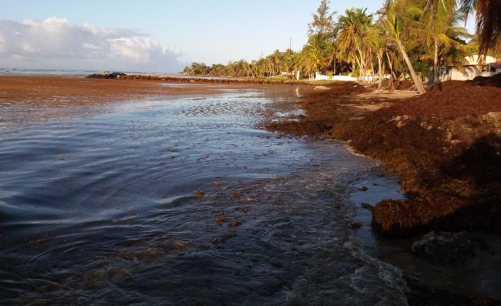 Sargasses - La Riviera du Levant Guadeloupe