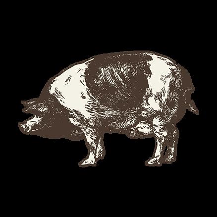 Schweizer Fleich Schwein