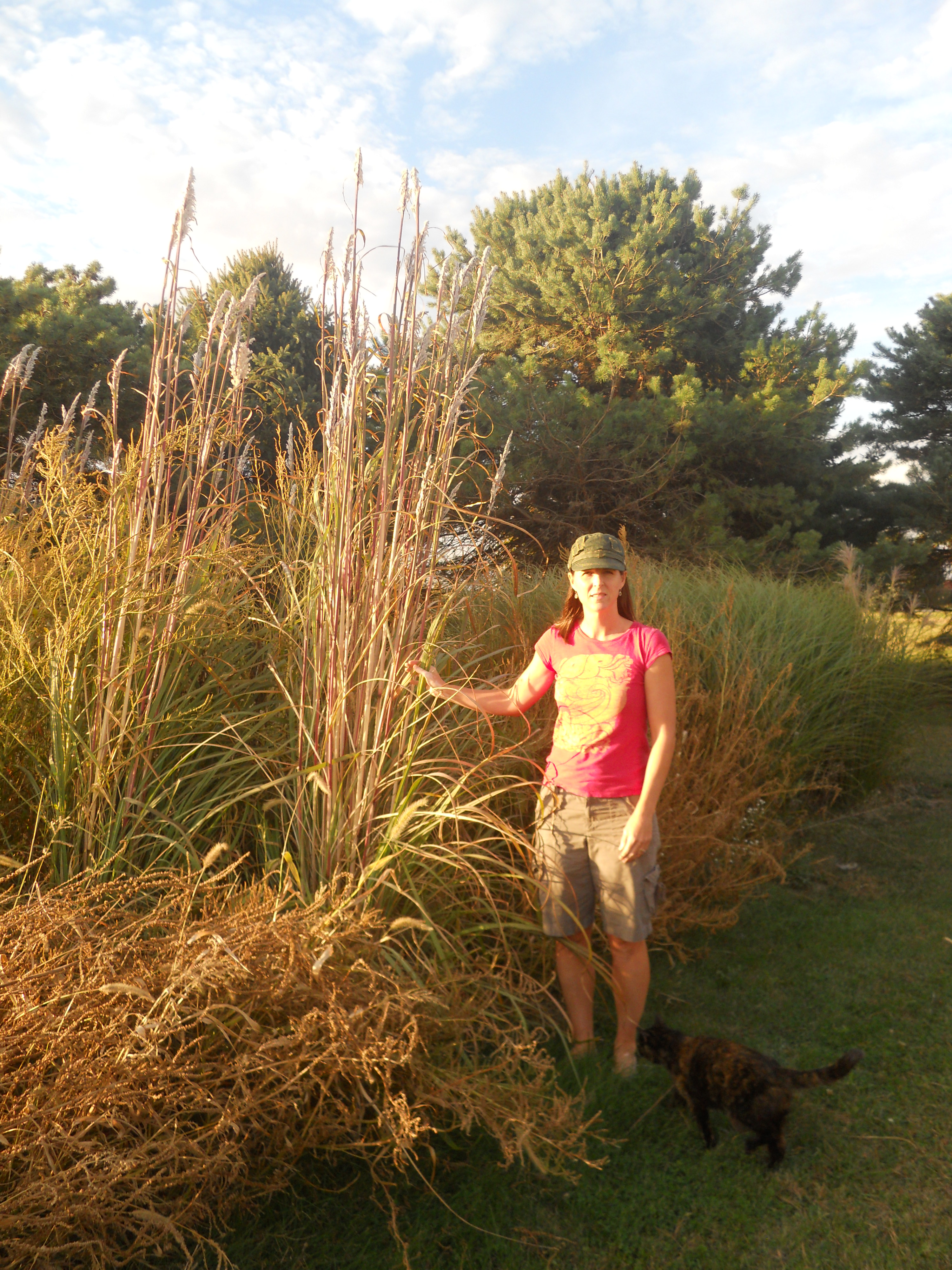 NORTHERN PAMPAS GRASS
