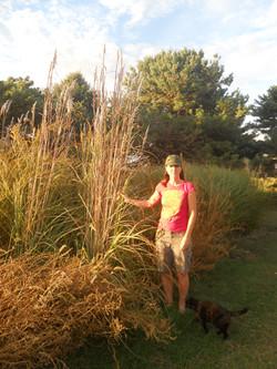 NORTHERN PAMPAS GRASS