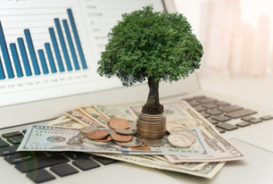 Investment concept. tree grow up on mone