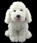 Man's best friend - White Dog