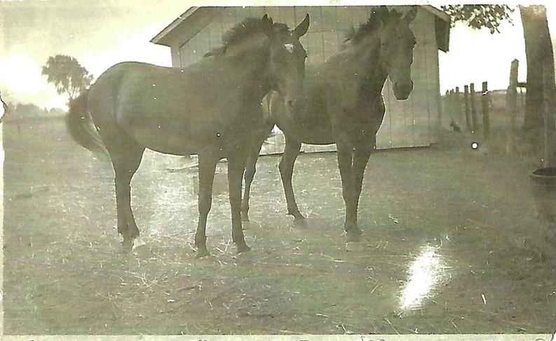 woodworth horses.jpg
