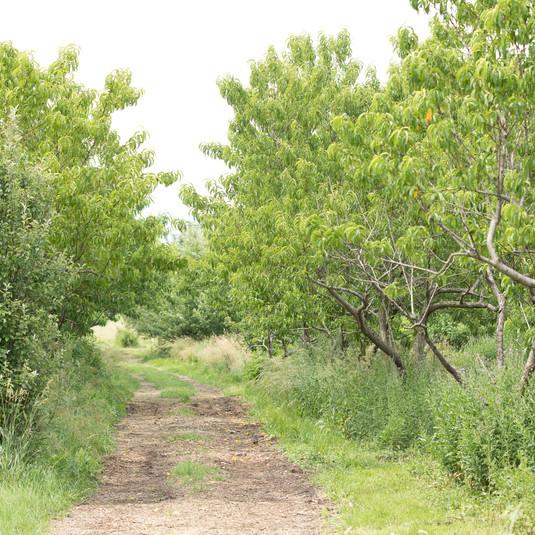 Prairie-fruits-farm-01_9189.jpg