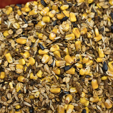 Prairie-fruits-farm-01_9819.jpg
