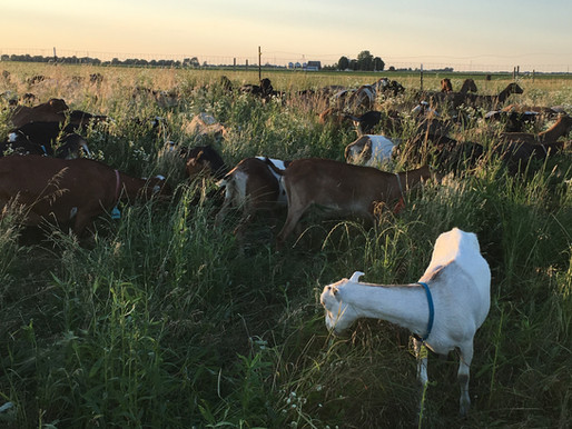 Annual Earth Day Reflections of A Goat Dairy Farmer
