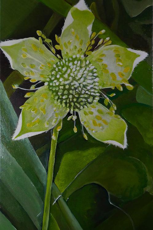 Thimble Flower 2019