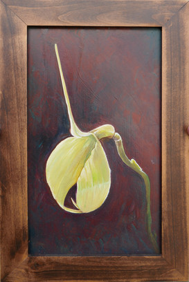 #11 white orchid