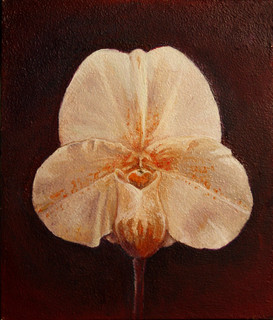 White Slipper Orchid 2017 - sold