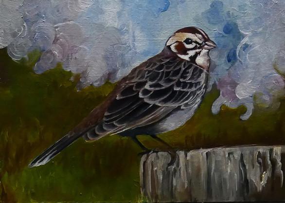 Song Sparrow 2018