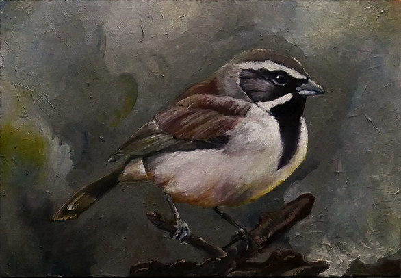 Black Throated Sparrow -sold