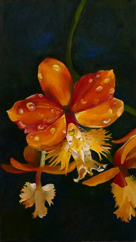 Orange fringed orchid - sold