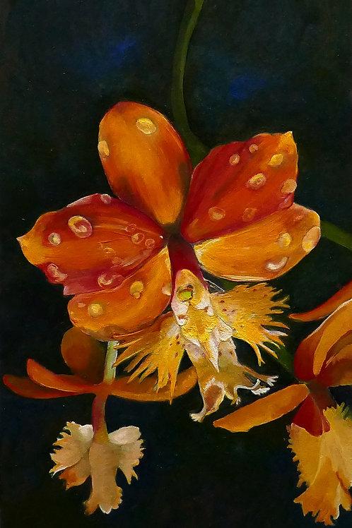 Orange Fringe Orchid