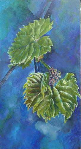 bbay grapes