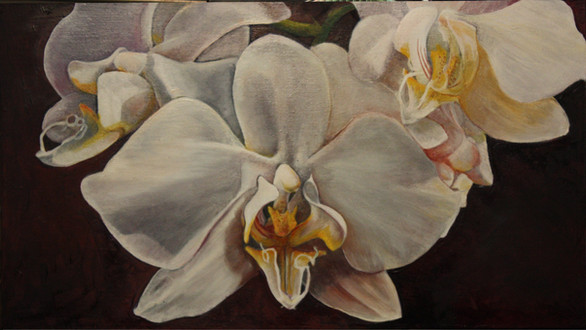 Moth orchid - sold