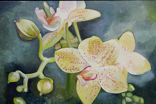 Yellow Orchid with pink spots