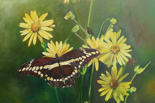 Giant Swallowtail and coreopsis