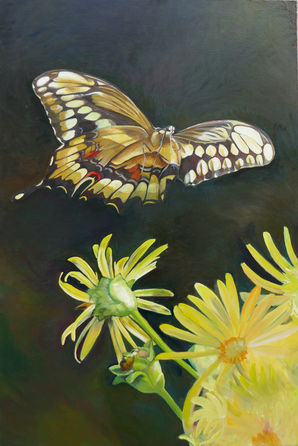 Giant Swallowtail and coriopsis