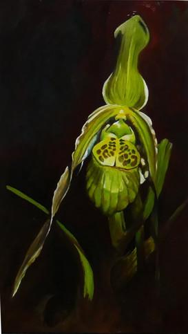 green slipper orchid 2019