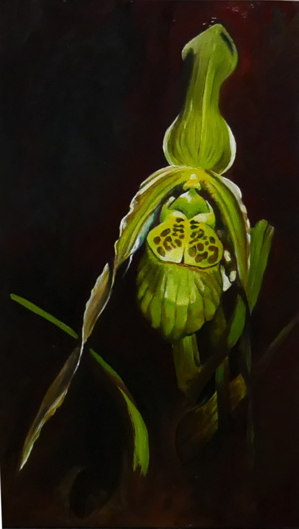 green slipper orchid 2019