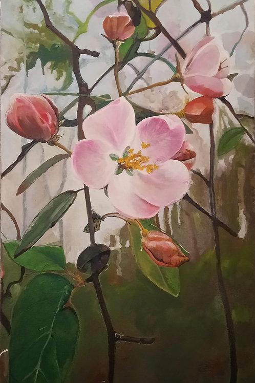Crabapple Blossom 2020