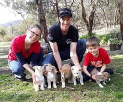 More dingo puppies!