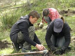 Planting for endangered butterflies