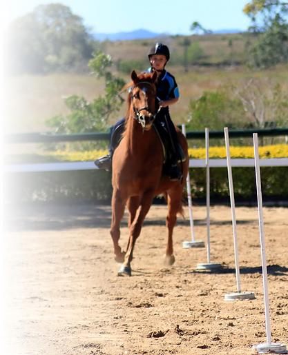 Horse Riding Book Online Queensland