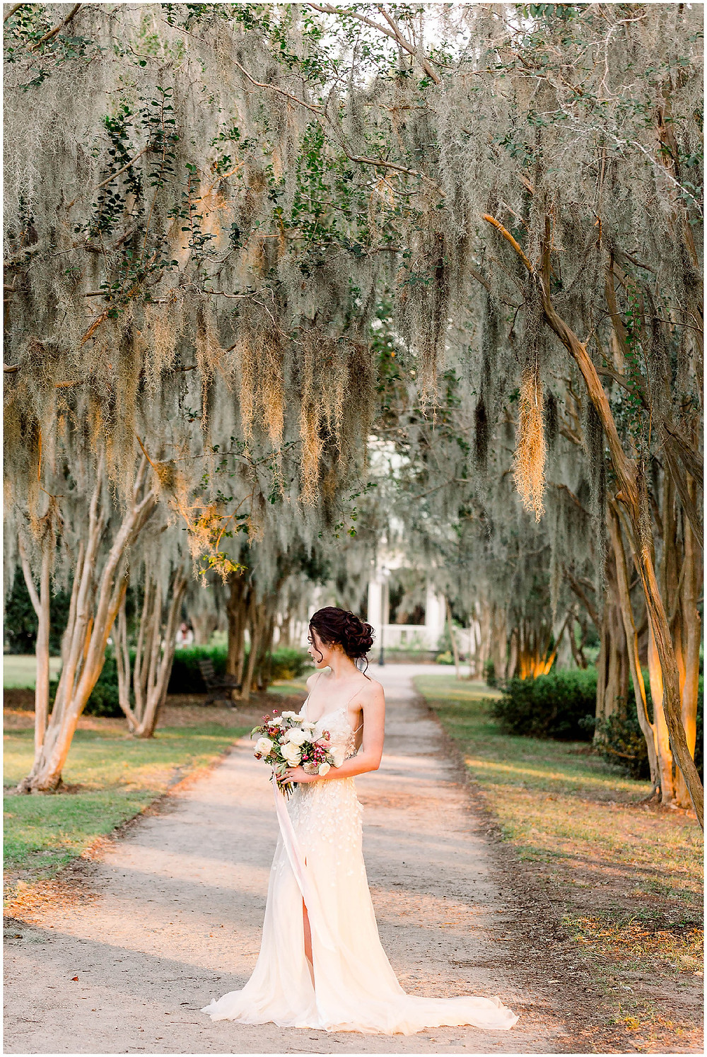 Spanish Moss Trees Charleston