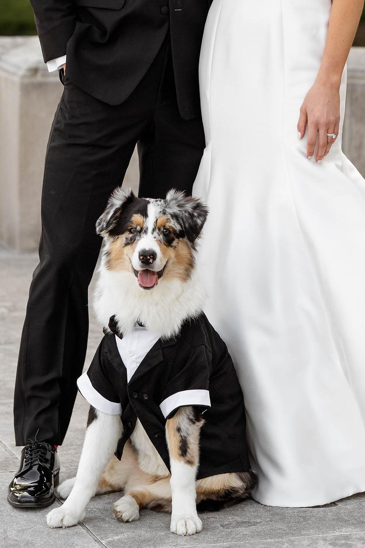 Wedding Day Pet