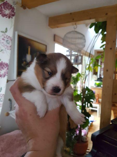 Guinevere nun ca. 2 Wochen alt.