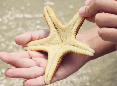 Vídeo lindo. Vale a pena ver! Estrela-do-mar... faça a diferença!
