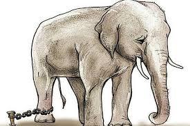Metáfora do Elefante