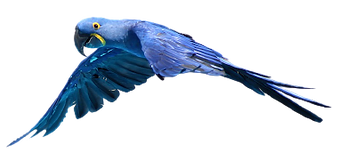 parrot-4837011_1280-removebg-preview.png