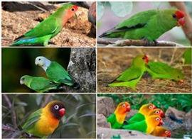 Collage 2020-02-29 17_56_51.jpg