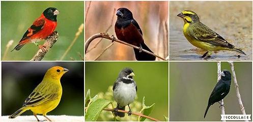 Passeriformes.jpg