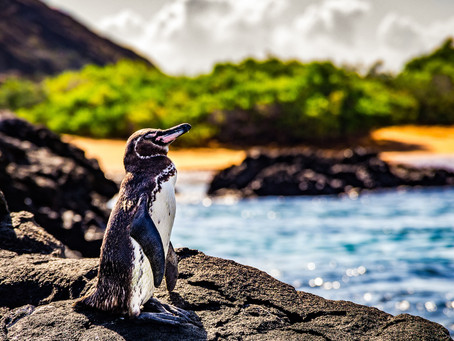 The Best Way to Visit the Galapagos Islands