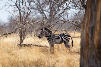 Destination: Tanzania