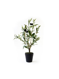 Olivetree_black_planter_Gray_Apple_York_