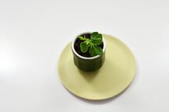 Pot de Fleur Lentille