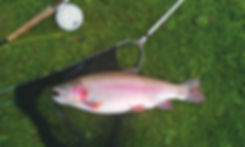 fly fishing, Isle of Wight, trout fishing, Marvel Cottage, self catering