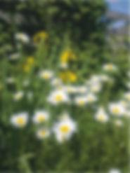 Marvel Cottage, wild flowers, Isle of Wight
