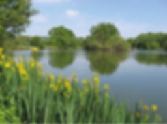 fly fishing, coarse fishing, carp fishing, Isle of Wight, Marvel Cottage, self catering
