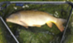 carp fishing, coarse fishing, Isle of Wight, Marvel Cottage, self catering