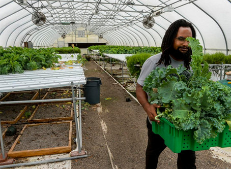 Urban agriculture in growth mode at Dunbar's Paradise Farms