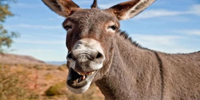 Donkeys: More important than the nation's mental health?
