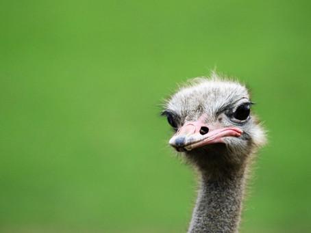 Mijn reis: Van struisvogelpolitiek naar focus