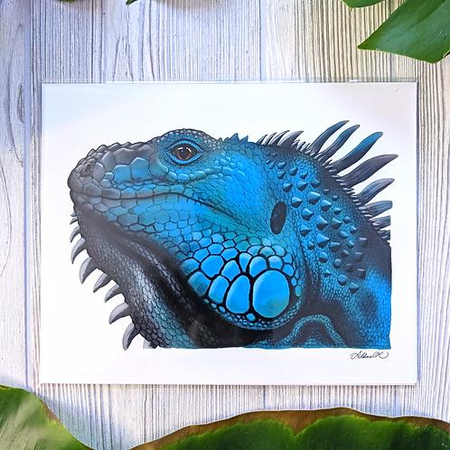 Blue Iguana Medium 8x10 Print